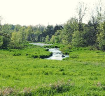 Stream - waterway