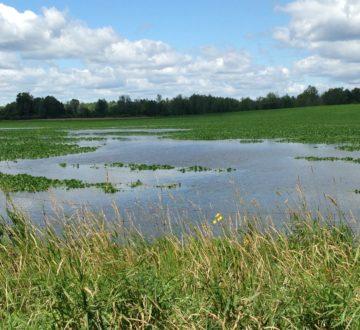 Flooded farm field