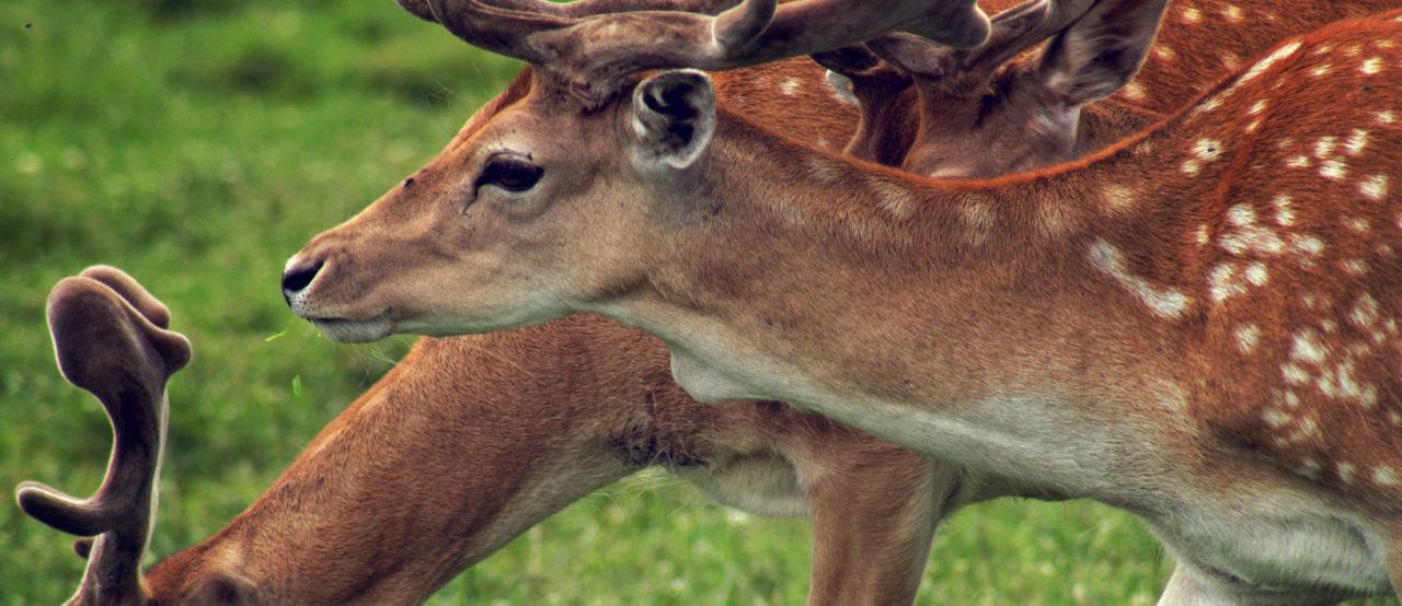 Field crop farmers need wildlife damage compensation too