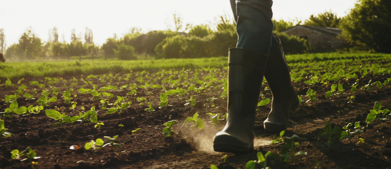 New report highlights gaps and vulnerabilities in Canada's agri-food workforce due to COVID-19